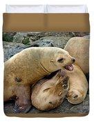 California Sea Lions Duvet Cover
