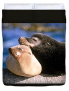 California Sea Lions Duvet Cover by Mark Newman