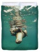 California Sea Lions Playing Sea Duvet Cover