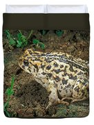 California Toad Bufo Boreas Halophilus Duvet Cover