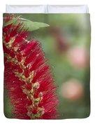 Callistemon Citrinus - Crimson Bottlebrush Duvet Cover