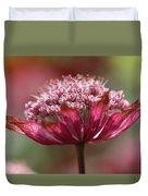 Botanica .. Candy Duvet Cover