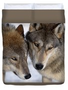 Captive Close Up Wolves Interacting Duvet Cover