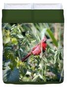Cardinal In Bush I Duvet Cover