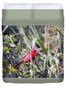 Cardinal In Bush Iv Duvet Cover