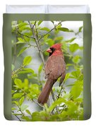Cardinal Pictures 123 Duvet Cover