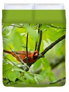 Cardinal Pictures 138 Duvet Cover