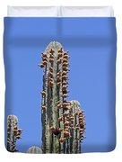 Cardon Cactus And Fruit  Duvet Cover