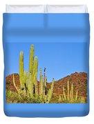 Cardon Cactus In Bahia Kino-sonora-mexico Duvet Cover