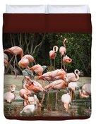 Caribbean Flamingos - Phoenicopterus Ruber Ruber Duvet Cover
