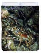 Caribbean Reef Lobster On Night Dive Duvet Cover