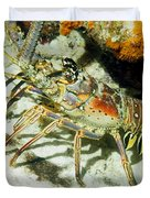 Caribbean Spiny Reef Lobster  Duvet Cover