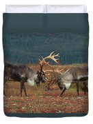 Caribou Males Sparring Duvet Cover by Matthias Breiter