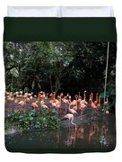 Cartoon - Flamingos In Their Exhibit Along With A Small Lake In The Jurong Bird Park Duvet Cover