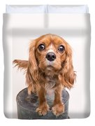 Cavalier King Charles Spaniel Puppy Duvet Cover by Edward Fielding