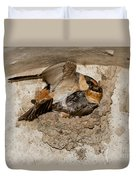 Cave Swallows Duvet Cover