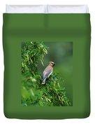 Cedar Waxwing 2 Duvet Cover