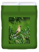 Cedar Waxwing 4 Duvet Cover