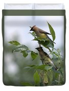 Cedar Waxwings Duvet Cover
