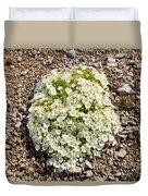 Cerastium Uniflorum Duvet Cover