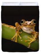 Chachi Tree Frog Ecuador Duvet Cover