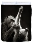 Chacma Baboons Grooming Duvet Cover