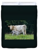 Charolais Cattle Nursing Young Duvet Cover