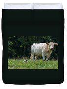 Charolais Cow And Calf In Field Duvet Cover