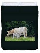 Charolais Cow Nursing Calf Duvet Cover