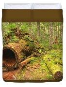 Cheakamus Old Growth Cedar Stumps Duvet Cover