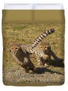Cheetah Juveniles Playing Duvet Cover