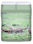 Cheetahs Acinonyx Jubatus Chasing Duvet Cover