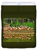 Chilean Flamingo Reflection In San Diego Zoo Safari Park In Escondido-california Duvet Cover