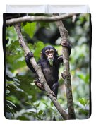 Chimpanzee Baby Eating A Leaf Tanzania Duvet Cover
