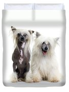 Chinese Crested Dogs Duvet Cover