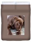 Chocolate Lab Pup Duvet Cover