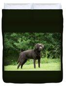 Chocolate Labrador Duvet Cover
