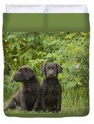 Chocolate Labrador Retriever Puppies Duvet Cover