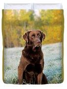 Chocolate Labrador Retriever Duvet Cover