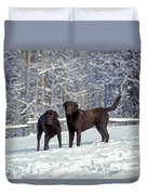 Chocolate Labrador Retrievers Duvet Cover