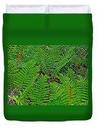 Cinnamon Ferns Along Skyline Trail In Cape Breton Highlands Np-n Duvet Cover