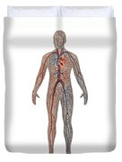 Circulatory System In Male Anatomy Duvet Cover
