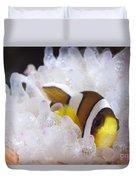 Clarks Anemonefish In White Anemone Duvet Cover