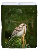 Clay-coloured Sparrow Pictures 50 Duvet Cover