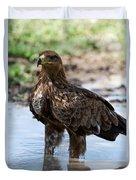 Close-up Of A Tawny Eagle Aquila Rapax Duvet Cover