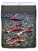 Close-up Of Fish In Water, Sockeye Duvet Cover