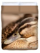 Close Up Shot Of Female Mallard Duck Duvet Cover