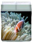 Clownfish 9 Duvet Cover by Dawn Eshelman