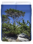 Coastal Trees In California's Point Lobos State Natural Reserve Duvet Cover by Bruce Gourley