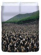 Colony Of Royal Penguin Eudyptes Duvet Cover
